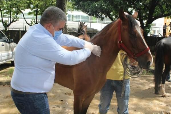 ICA incrementa controles y vacunación en el Huila para el movimiento de equinos por fiestas de San Pedro
