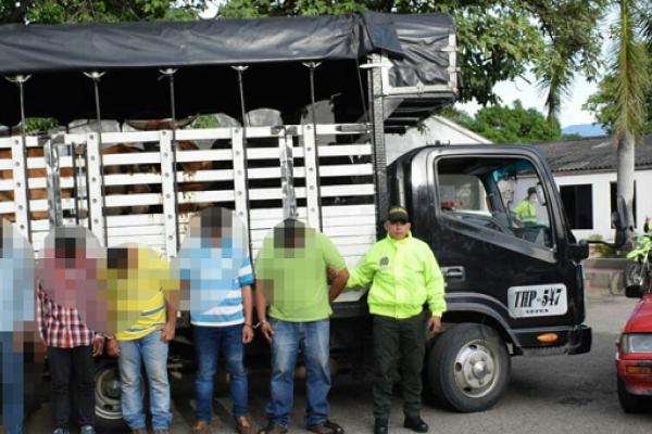 Detenidos por Policía, Fiscalía y CTI cinco personas acusadas de Abigeato