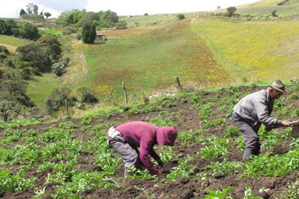 I Congreso Nacional Agropecuario Virtual