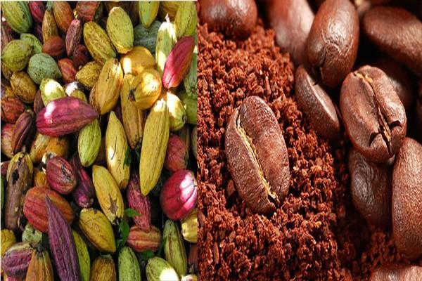 Avanza la planeación de Primera Feria Internacional de Cacao, Café y Muestra Agroturística