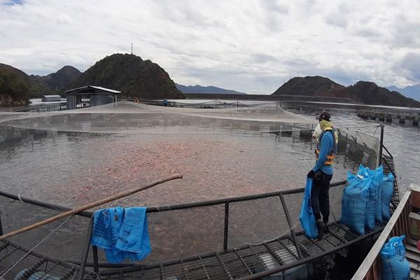 Proyectos científicos para mejorar la producción de tilapia en el Huila