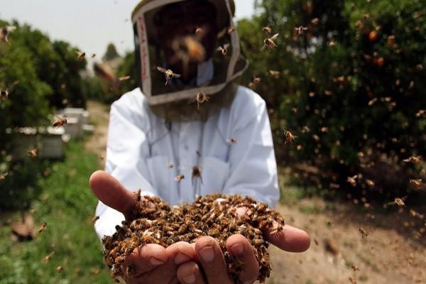 Demanda del sector apícola cubre solo un tercio de la producción anual