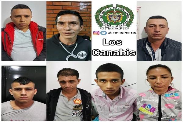 """Cayeron """"Los Canabis"""" en Pitalito"""