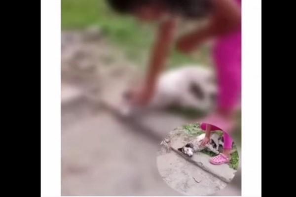 Perro fue macheteado y baleado en La Plata